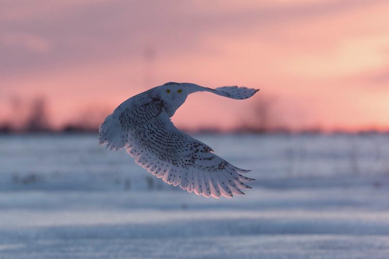 Sunset Snowy