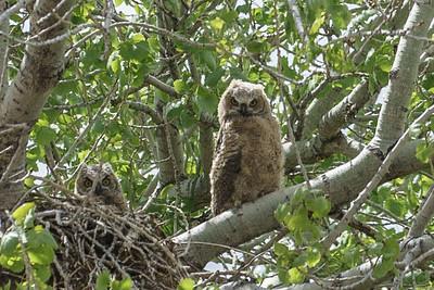 owl swerve