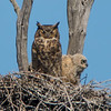 owl                   5311