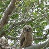 eyes of an owl