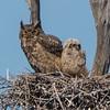 owl              5711