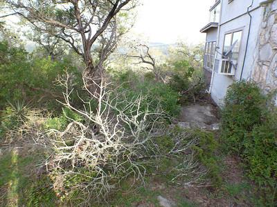 LookoutMountain - Tree Work