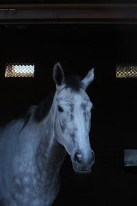 Lady Bergamot 27.2.19