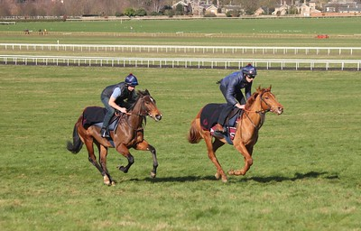 Exceed & Excel ex Firenze & Magistrate 09.03.2017.1