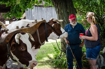 Gene, the Oxen and Dr. Melissa