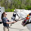 05.02.15 - Red Brick and Roses Carriage Parade at Oxford, Ohio.  In the parking lot preparing for the parade.
