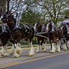 05.02.15- Team of Clydesdales.  Love to listen