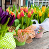 Spring Tulips photographed by Judi Checketts