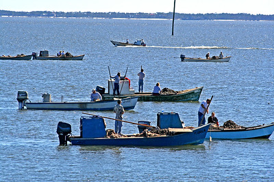 Tonging Oysters in Apalachicola Bay