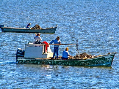 Oyster Tonging in Apalachicola Bay