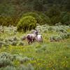 Wild Horses New Mexico