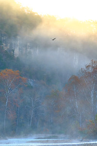 Golden Eagle From the Mist