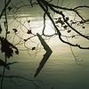 Foggy Driftwood 3