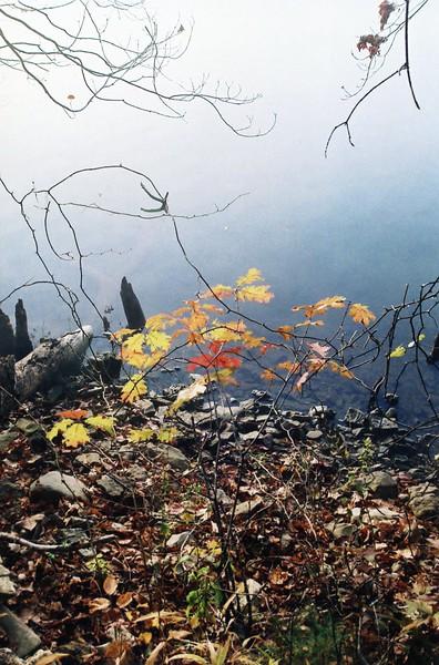 Lake & Leaves 2