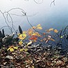 Lake & Leaves 2
