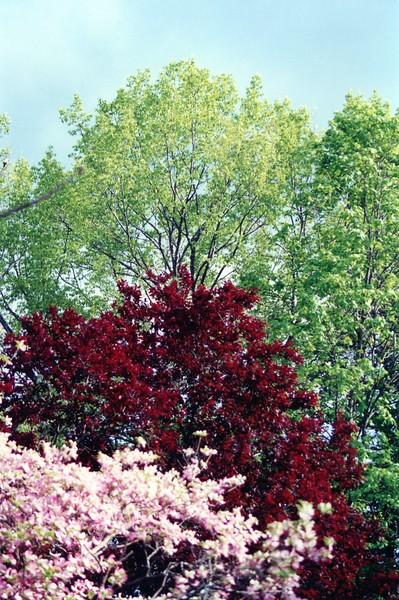 Tri-Color Trees 1