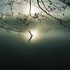 Foggy Driftwood 1