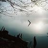 Foggy Driftwood 2