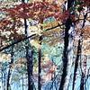 Troy Autumn