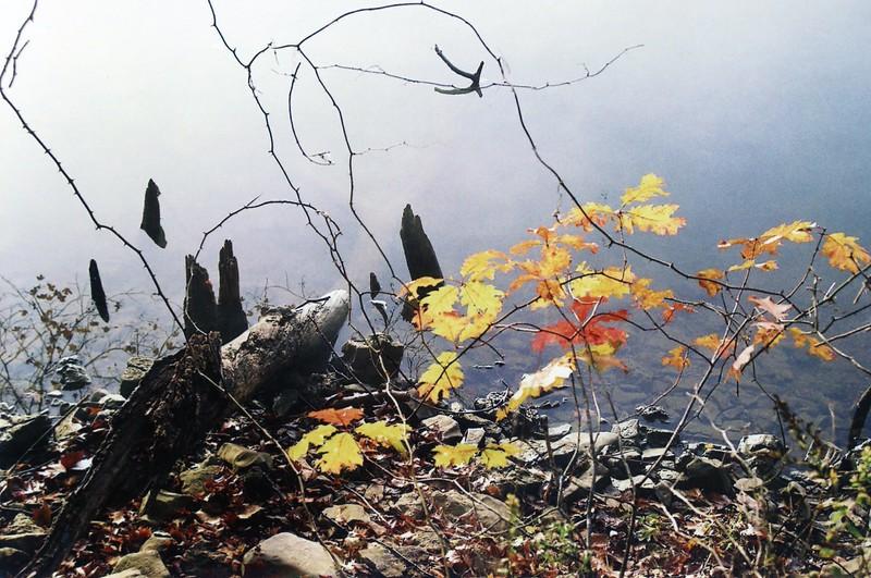 Lake & Leaves 3