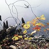 Lake & Leaves 3
