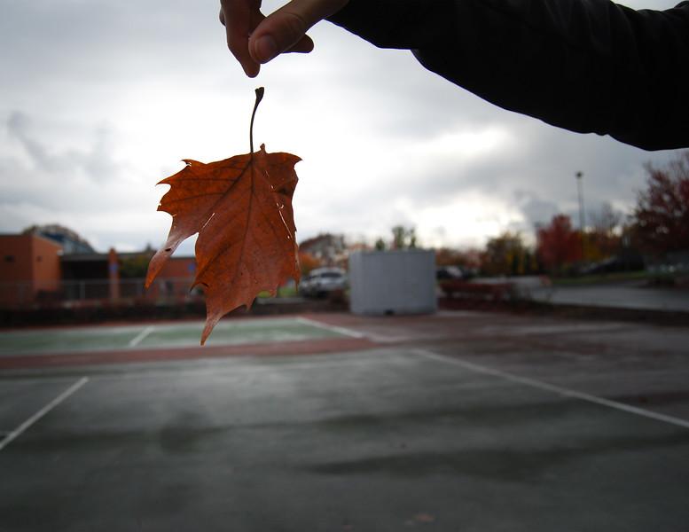 Short Shutter Speed, Leaf Falling