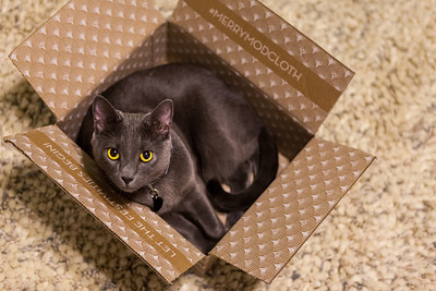 November 18  Emily got a package today, and Tungsten immediately jumped into the box. And stayed there. And so, the highlight of my evening was taking pics of Tungsten in a box. Sigh.