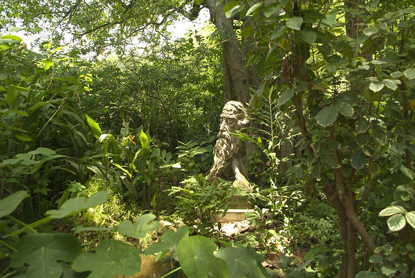 The garden of Shyamali D's home.