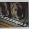 2010_bunnies_001