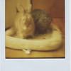 2010_bunnies_002-2