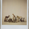 2010_animals_006