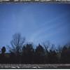 2011_trees_018