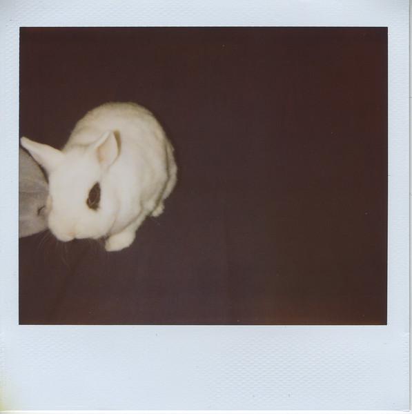 2011_April_pig_008