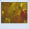 2011_November_burbur002