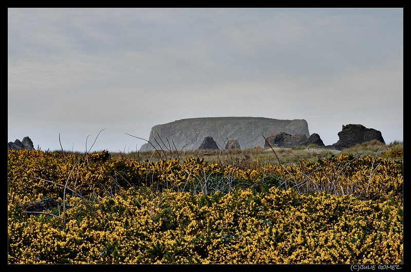 Gorse and Table Rock
