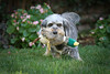 """July 18th ~ The Brannon kids.<br /> I sat in my friend Lois's yard today for a bit and took some pictures of her beautiful back yard. Toby her dog was a show off, bringing all kinds of toys out to play in the yard.  He was irresistible. More in their gallery <a href=""""http://paws4camera.smugmug.com/Portraits/Brannon-Kids/18154302_fZVj2Q#1394125272_ptdmL9n"""">http://paws4camera.smugmug.com/Portraits/Brannon-Kids/18154302_fZVj2Q#1394125272_ptdmL9n</a>"""