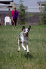 "May 21 ~ Simba catches the ball, she is a natural.  Follow this link to more of Simba and Houston at the Dog Park <a href=""http://paws4camera.smugmug.com/Portraits/Easts-Gallery/12512868_wp8FR#1309092788_tD4HLvX"">http://paws4camera.smugmug.com/Portraits/Easts-Gallery/12512868_wp8FR#1309092788_tD4HLvX</a>"