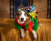 Happy Cinco de Mayo ~ Izzy has turned into such a willing model.