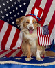 "June 25 ~ Happy Fourth of July with Tiki<br /> A few more shots with Morgan and Tiki celebrating the holiday! <a href=""http://paws4camera.smugmug.com/My-Dogs/4th-of-July-2012/23873787_2KhmwN#!i=1935898659&k=vv6MGRN"">http://paws4camera.smugmug.com/My-Dogs/4th-of-July-2012/23873787_2KhmwN#!i=1935898659&k=vv6MGRN</a>"