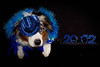 """Ringing in the NEW Year!<br /> It's a new year and a new challenge....In this picture we have Izzy's in all her glory, ready to party in the new year!  And for the rest of the girls check this out <a href=""""http://paws4camera.smugmug.com/My-Dogs/New-Years-2012/20831440_D6mhhd#1653642532_HFwtKwT"""">http://paws4camera.smugmug.com/My-Dogs/New-Years-2012/20831440_D6mhhd#1653642532_HFwtKwT</a>"""