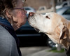 Golden Kiss<br /> February 2, 2010<br /> Exeter's local pooch stealing a smooch from my Mom