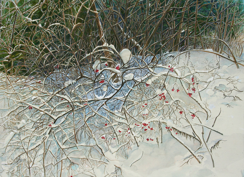 Rosehips in Winter<br /> watercolour<br /> For Sale- Call the gallery- 902-863-5407