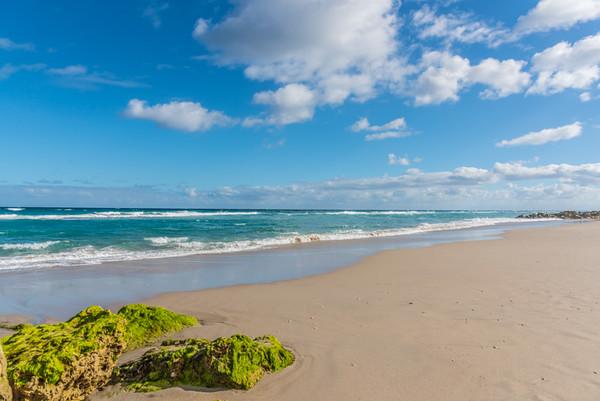 PALM BEACH  19