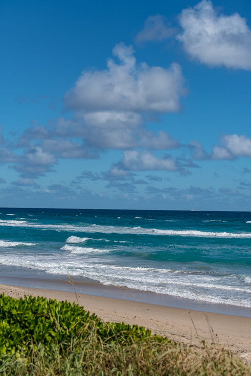 PALM BEACH  61