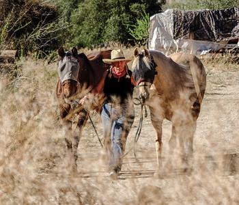 WOMAN LEADING HORSES