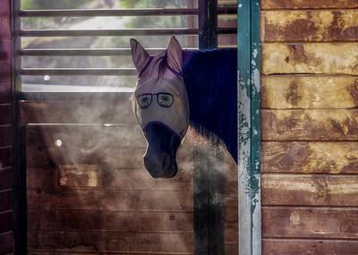Comic Horse