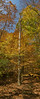 VERTICLE FALL PANORAMA_filtered copy