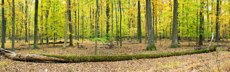 FALL PANORAMIC ARC 1