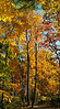 AUTUMN VERTICLE PANORAMA VPN4
