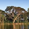 Sepik River - Rain forests